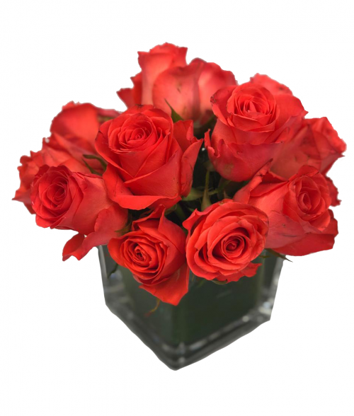 Orange rose with coral tones and red on its outer guard petals