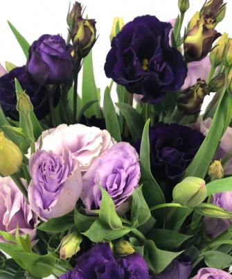Purple & Lilac Lisianthus